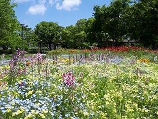 つどいの広場花壇.jpg
