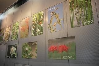 190905江戸の薬と健康展 (6).jpg