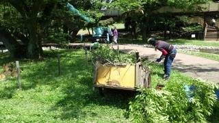 200520バイオネスト木の伐採 (1).jpg