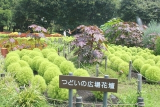 200804公園の様子 (14).jpg