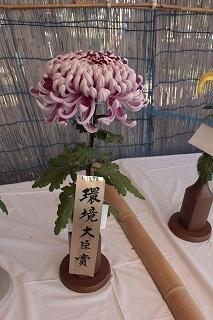 201031菊花大会 (2).jpg