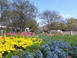 20210401_つどいの広場西花壇.jpg