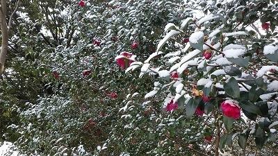 210110雪の園内 (25).jpg