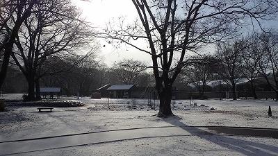 210110雪の園内 (7).jpg