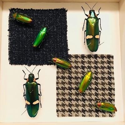 210320昆虫展.jpg