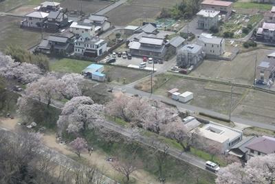210327展望の桜 (7).JPG