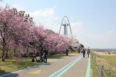 ★200404桜 (12).jpg