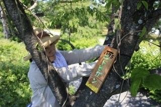 みんなでボランティア!木曽川堤の桜に樹名札をかけよう.jpg