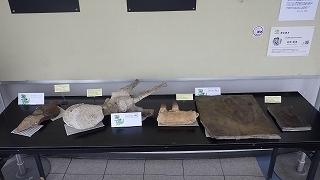 化石展示 (2).jpg
