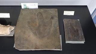 化石展示 (3).jpg
