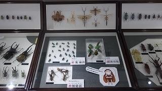 昆虫標本 (2).jpg