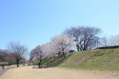木曽川堤 (20).jpg