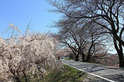 木曽川堤 (8).jpg