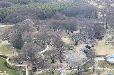 桜0322 (1).jpg
