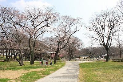 桜0322 (2).jpg
