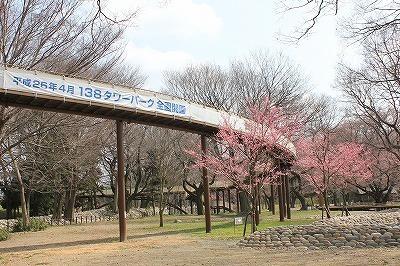 桜0322 (3).jpg