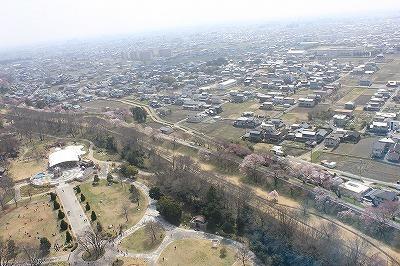 桜0322 (7).jpg