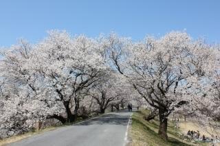 桜コンシェルジュ (2).jpg