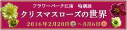 banner_konan_christmasrose.jpg