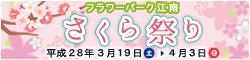 banner_konan_sakura.jpg